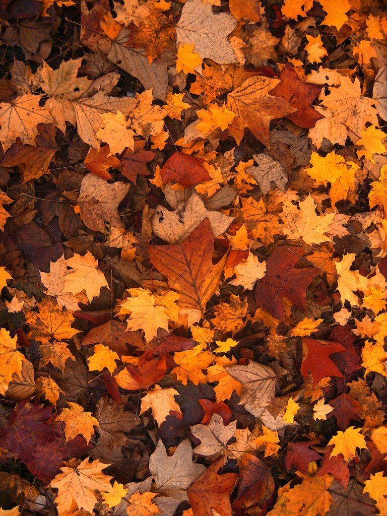 Ben jij al klaar voor de herfst?